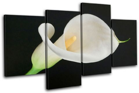 Calla Lily Flowers Floral - 13-1490(00B)-MP04-LO